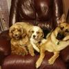 Smart Pets Grooming Plus