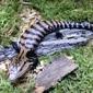 Outback Reptiles - Manassas, VA