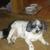 Dapper Dogs Pet Salon