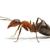 Nick's Termite & Pest Control Inc.