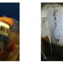 Mold Inspection & Testing San Francisco CA - San Francisco, CA