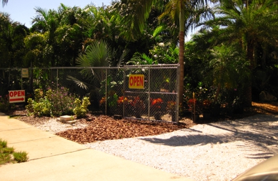 Paradise Palms Landscaping Palm Harbor Fl