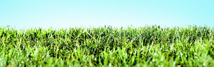 grass-one-edit.jpg