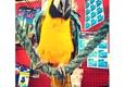 Alamo Aquatic Pets - San Antonio, TX