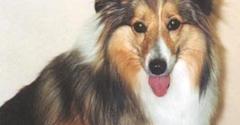 Canines Unlimited - Juneau, AK