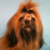 Steve's All Breed Grooming and Pet Salon