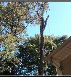 Tree Works Unlimited - Charlestown, RI