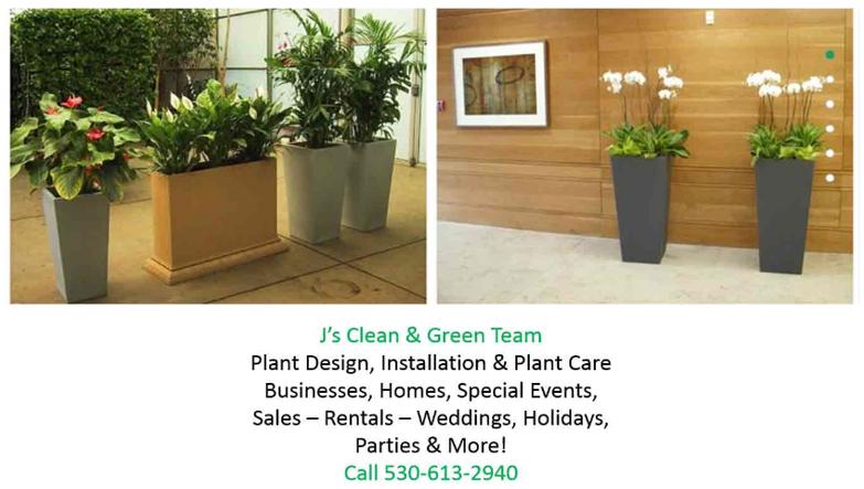 plant_image_service_info