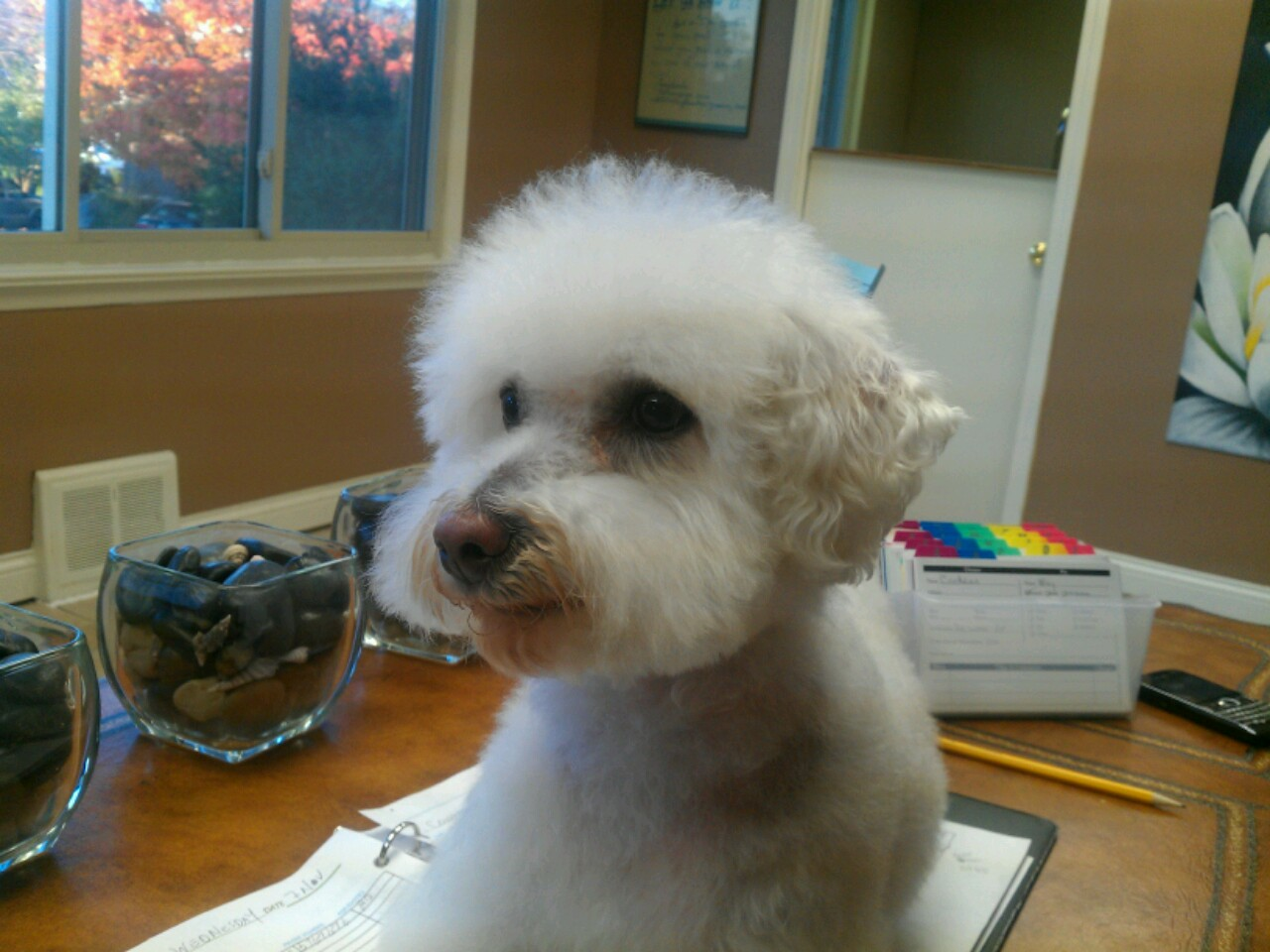 Absolutely Paws-itive dog grooming salon 509 Southland Dr