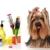 Dog Town Pet Resort