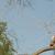 Tree Service of San Antonio