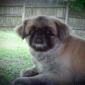 Rocking G Animal Rescue - Wells, TX