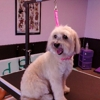Bubbly Bow Wow Dog Grooming - CLOSED