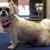 Smart Dogs Grooming Salon