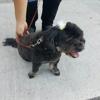 Puppy Love Pet Spa