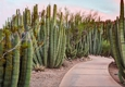Complete Landscaping - Tucson, AZ