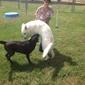 Almost Home Pet Resort, Inc. - Valrico, FL