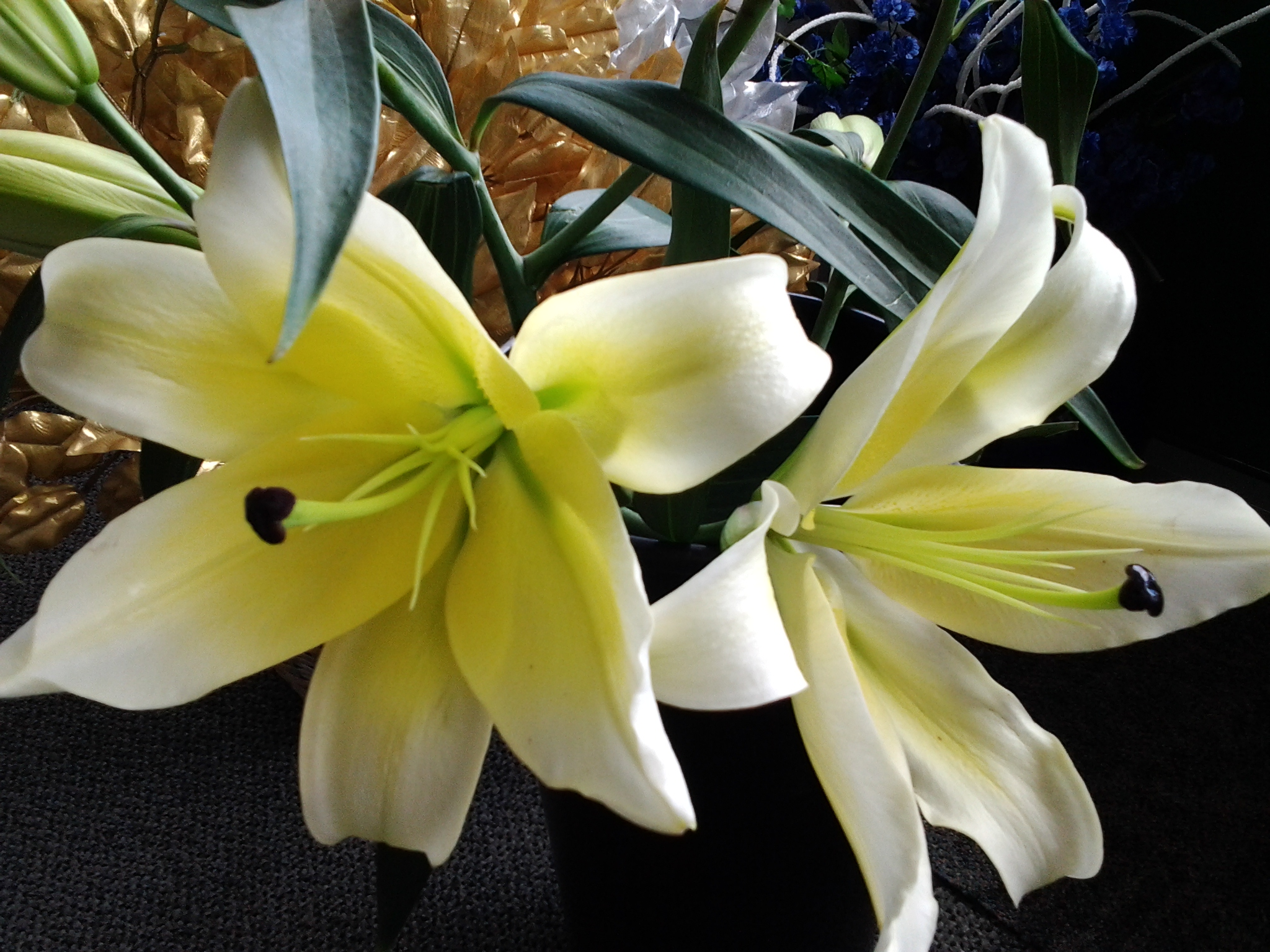 Tropical Interiors Florist Inc 1303 53rd Ave W Bradenton Fl