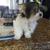Carousel Pet Grooming