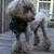 My Pampered Pooch