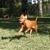 Tails-A-Waggin Animal Hospital & Pet Resort