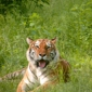 New Zoo - Suamico, WI