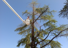 Cottonwood Tree Service - Cottonwood, AZ