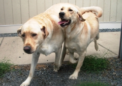 Best Friends Pet Care - Charlotte, NC