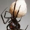 Mid-South Pest Control Sales & Service