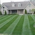 Luigislawncare( get you free cut!! Call now)