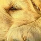 Hilton Head Veterinary Clinic - Okatie, SC