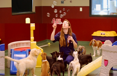 Blue Springs Animal Hospital & Pet Resort - Blue Springs, MO