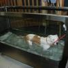 Coastal Carolina Veterinary Specialist LLC