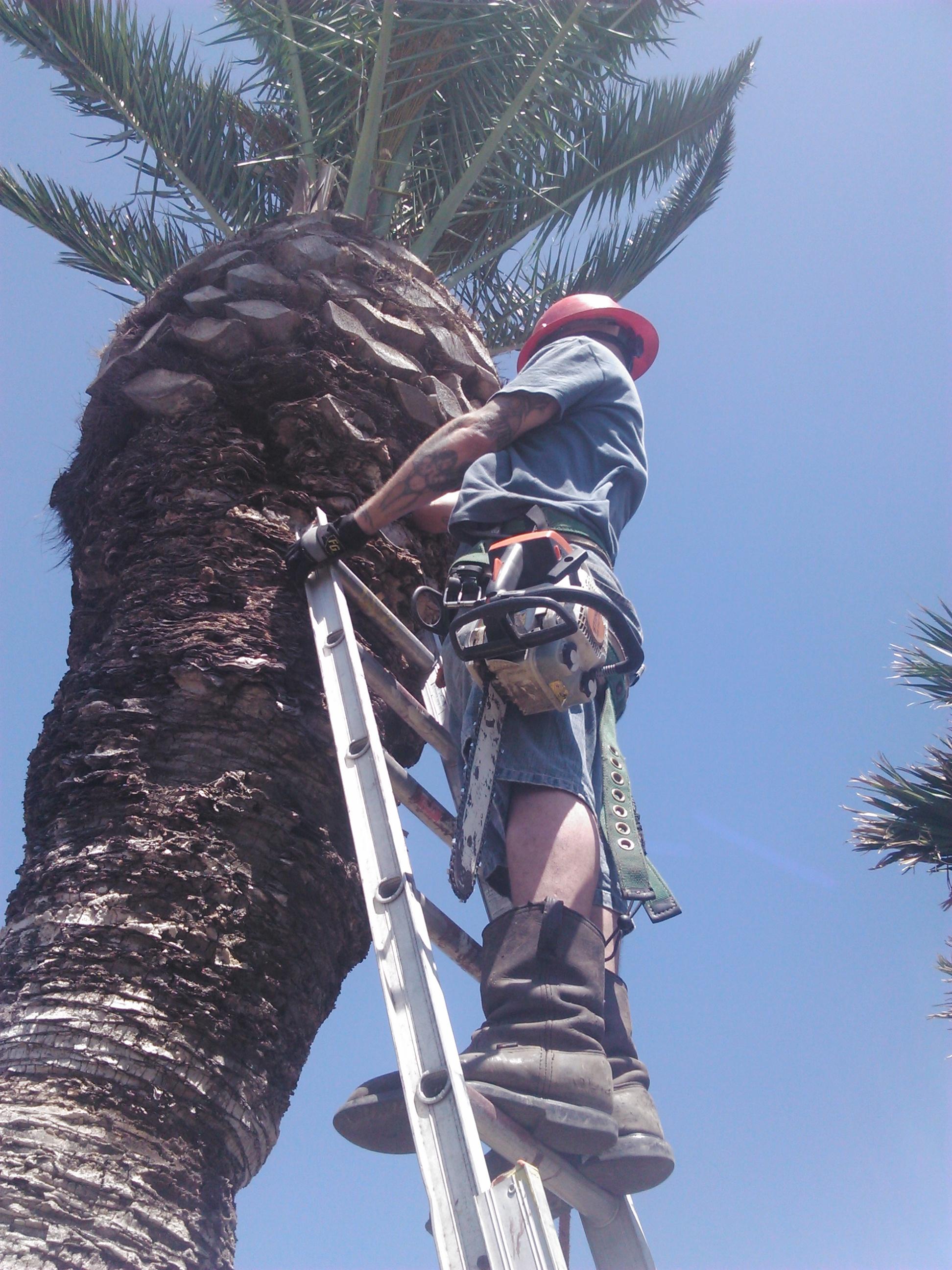 Johnny S Palm Amp Tree Svc 5105 Margaret Ave Corpus Christi