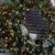 Christmas Lighting Tulsa