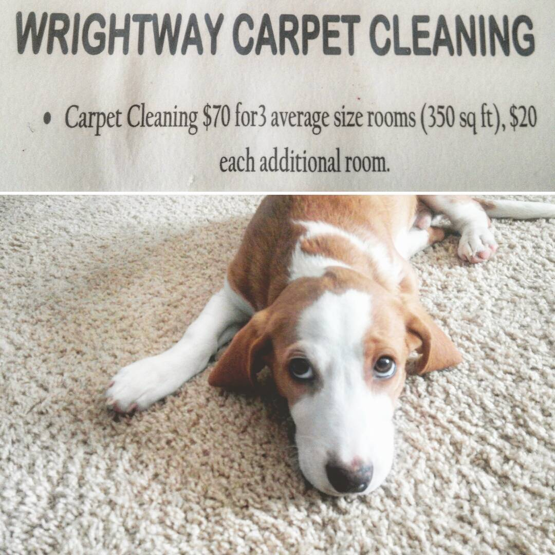 Wrightway carpet & upholstery cleaning