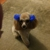 Clip & Dip Dog Grooming LLC