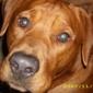 Blount Veterinary Clinic - Maryville, TN