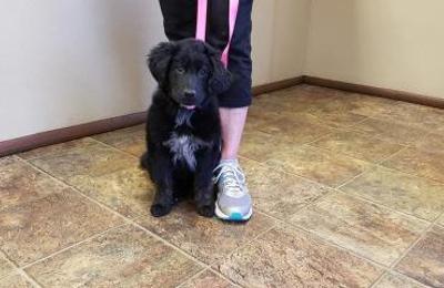 Pratt Veterinary Services - Broken Bow, OK