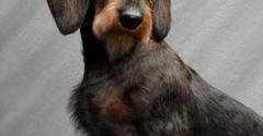 Pol Veterinary Services - Weidman, MI