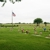 Eubank Cedar Creek Memorial Park