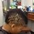 Headz Up Barber Shop