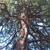 Siskiyou Tree Experts