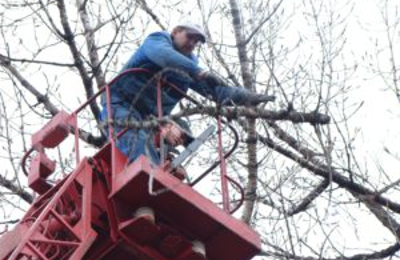 Southern Maryland Fellers Tree Service - California, MD