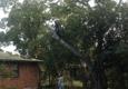 Green Pine Tree Service