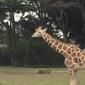 San Francisco Zoo & Gardens - San Francisco, CA