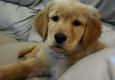 Dog Guard Out of Sight Fencing  - Memphis - Cordova, TN