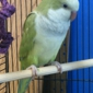 Mayberry Pet Center - Mount Airy, NC