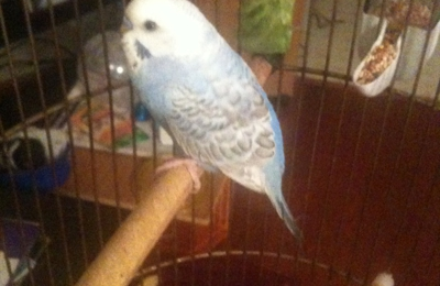 Furry & Feathered Friends Pet Sitting & Boarding - Bonne Terre, MO