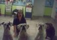 Veterinary Care Unlimited - Ozone Park, NY